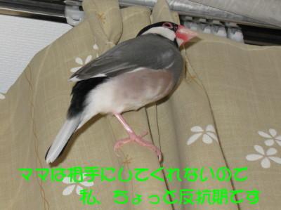 b0158061_23282911.jpg