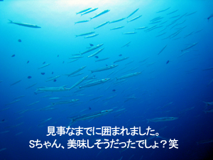空飛ぶダイバー誕生!_f0144385_0294674.jpg