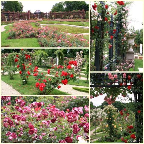 「L\'Hay-les-Roses」のバラ_c0090198_437448.jpg