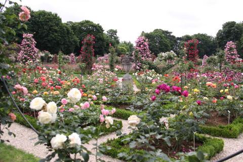 「L\'Hay-les-Roses」のバラ_c0090198_4432335.jpg
