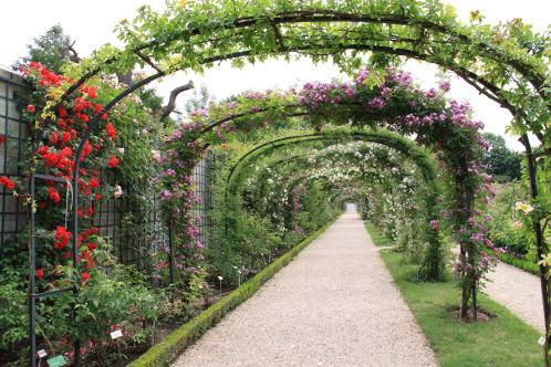 「L\'Hay-les-Roses」のバラ_c0090198_4454475.jpg
