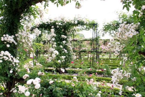 「L\'Hay-les-Roses」のバラ_c0090198_447820.jpg