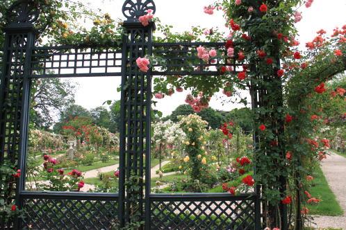 「L\'Hay-les-Roses」のバラ_c0090198_448098.jpg
