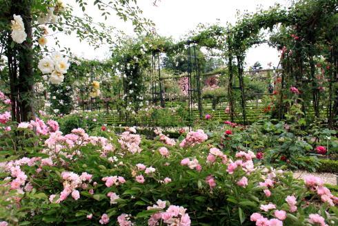 「L\'Hay-les-Roses」のバラ_c0090198_4482619.jpg