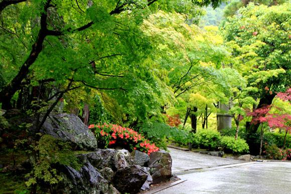 永観堂の雨_e0048413_18374740.jpg