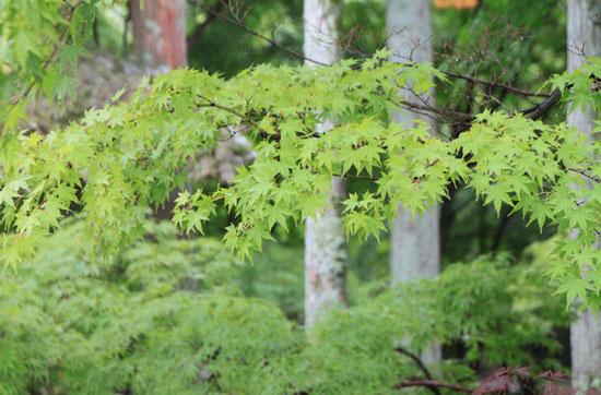 永観堂の雨_e0048413_18375998.jpg