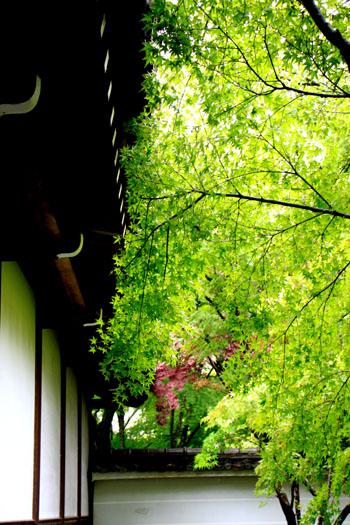 永観堂の雨_e0048413_1840122.jpg