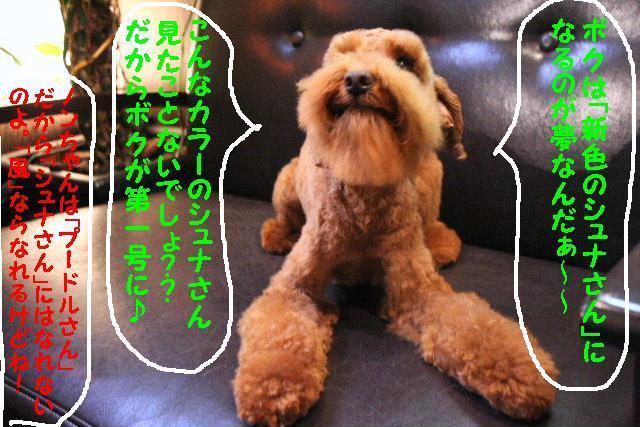 b0130018_1048410.jpg