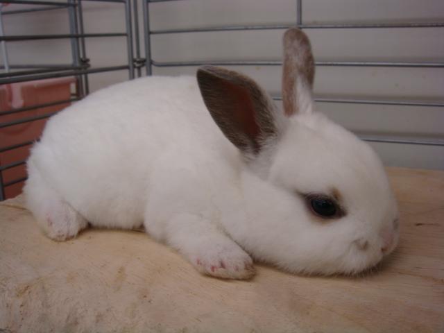 ウサギ・ハム_f0189122_14502797.jpg