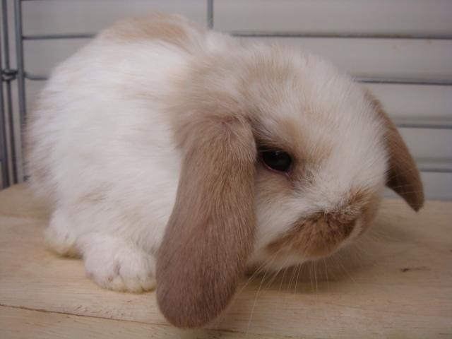 ウサギ・ハム_f0189122_14514271.jpg