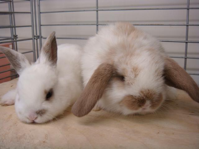 ウサギ・ハム_f0189122_14523562.jpg