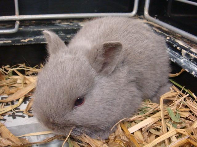 ウサギ・ハム_f0189122_14524941.jpg