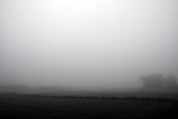 霧の朝_e0180823_1352061.jpg