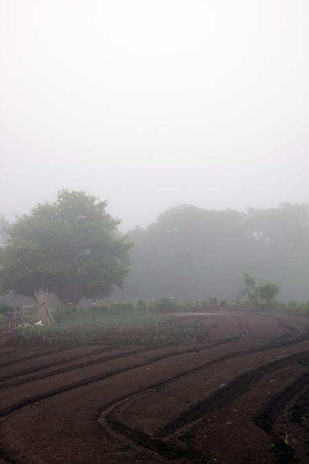 霧の畑_e0180823_13535369.jpg
