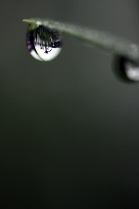 紫の水玉_e0180823_13564848.jpg