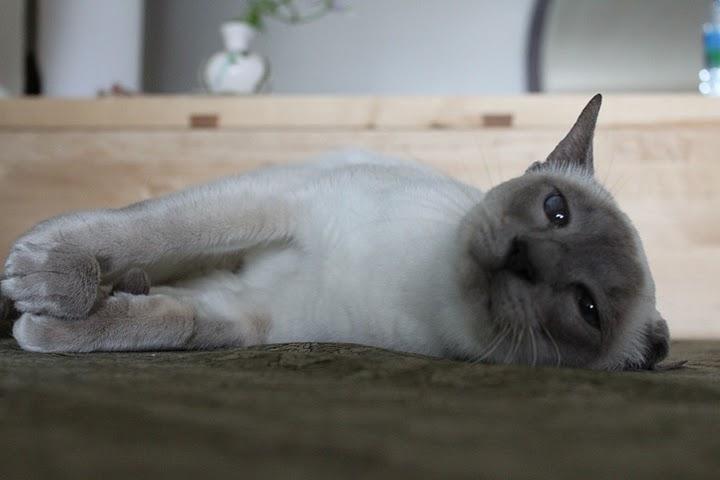 猫の写真集_f0095325_11124828.jpg
