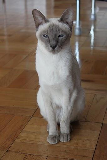 猫の写真集_f0095325_11132920.jpg