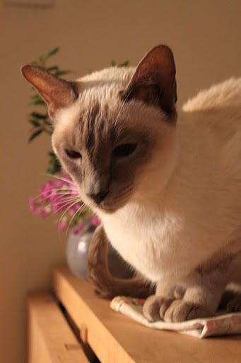 猫の写真集_f0095325_11134891.jpg