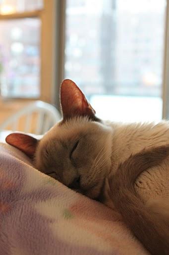 猫の写真集_f0095325_1114175.jpg