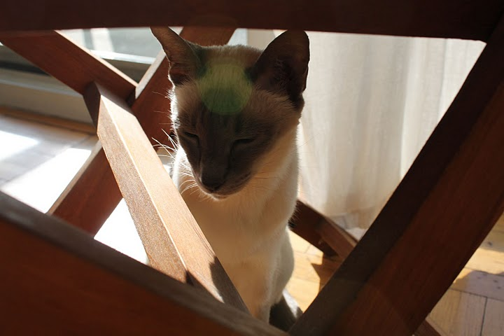 猫の写真集_f0095325_11143697.jpg