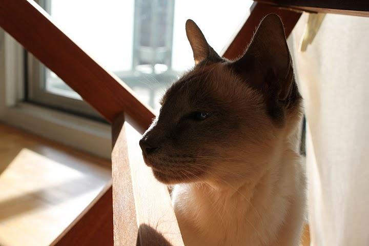 猫の写真集_f0095325_11144550.jpg