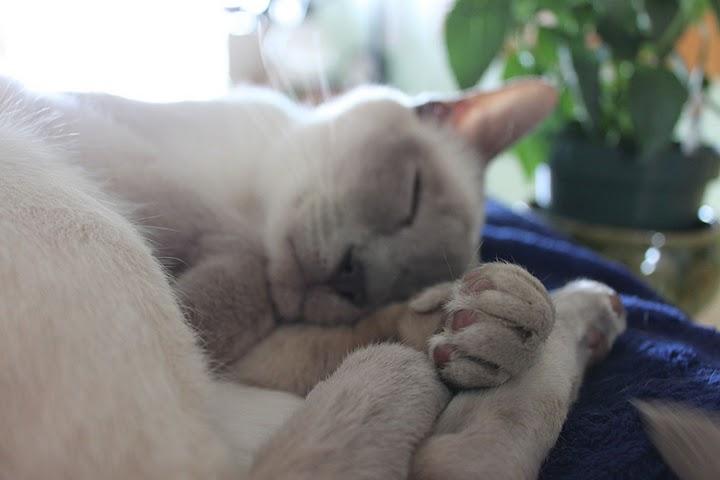 猫の写真集_f0095325_11145784.jpg