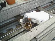賃貸マンションの外部改修工事7_d0059949_12532197.jpg