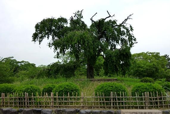 京都にて_b0093754_2359441.jpg