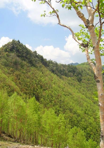 <2010年6月12日>奥秩父の遥かなる幽寂峰「和名倉山」 (リベンジ登山)_c0119160_21341289.jpg