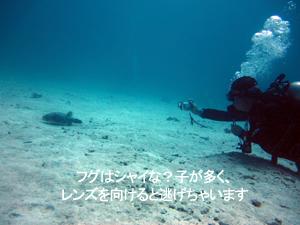スーパーリピーターイトウ様とラチャヤイ島へ!_f0144385_846667.jpg