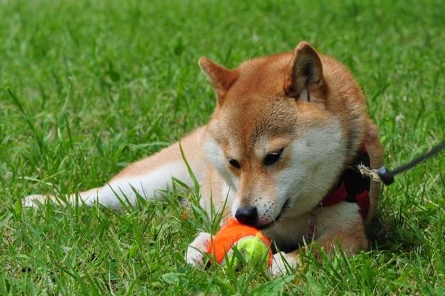 かぼちゃん、走って遊ぼうよ!_a0126590_89754.jpg