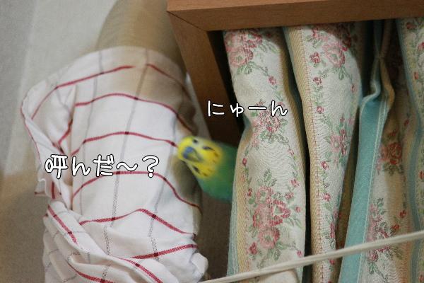 b0062090_0314550.jpg