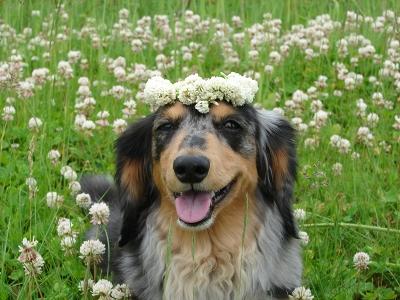 お花のかんむり_f0195891_15594530.jpg