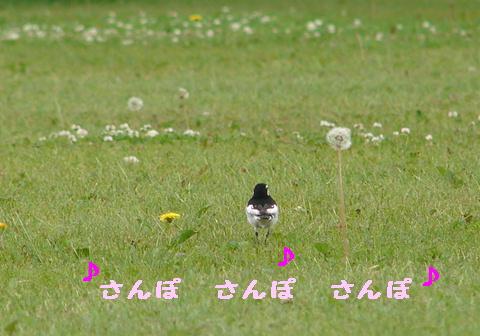 お花のかんむり_f0195891_1615215.jpg