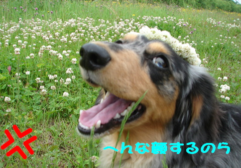 お花のかんむり_f0195891_1643219.jpg
