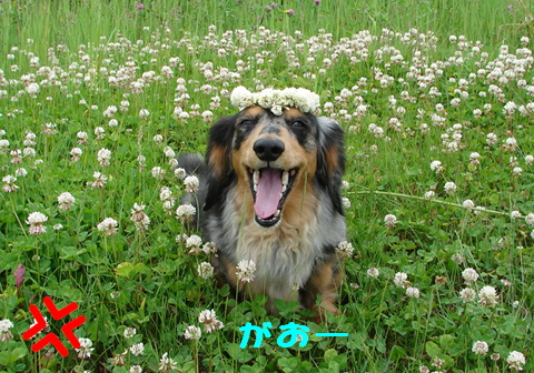 お花のかんむり_f0195891_1644989.jpg