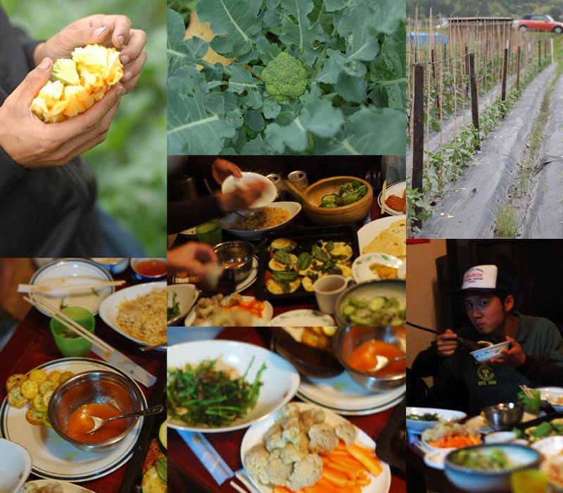 採れたて新鮮野菜パーティー_a0115906_15173092.jpg