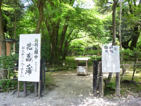 上賀茂神社 花菖蒲_e0048413_2022508.jpg