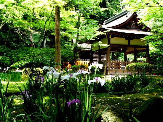 上賀茂神社 花菖蒲_e0048413_20233971.jpg