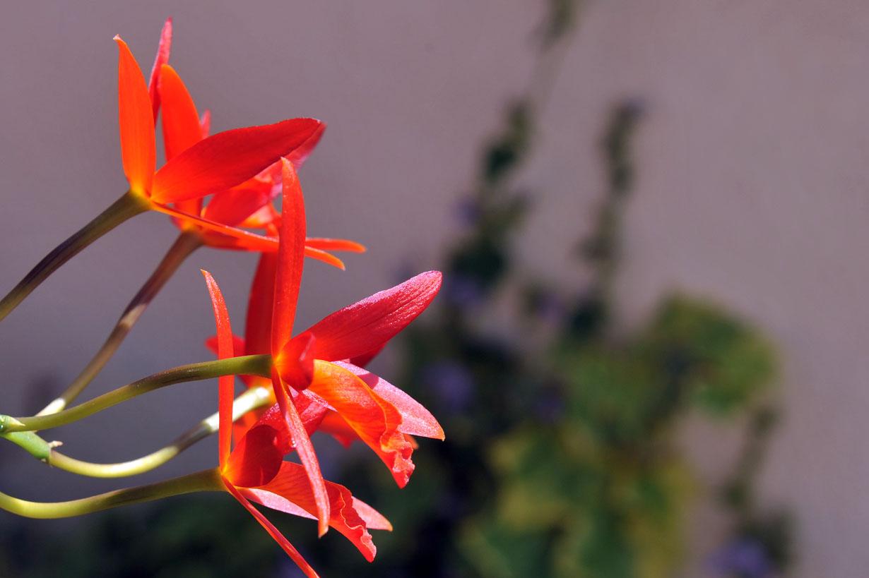 ランの花 壁紙写真_f0172619_10263481.jpg