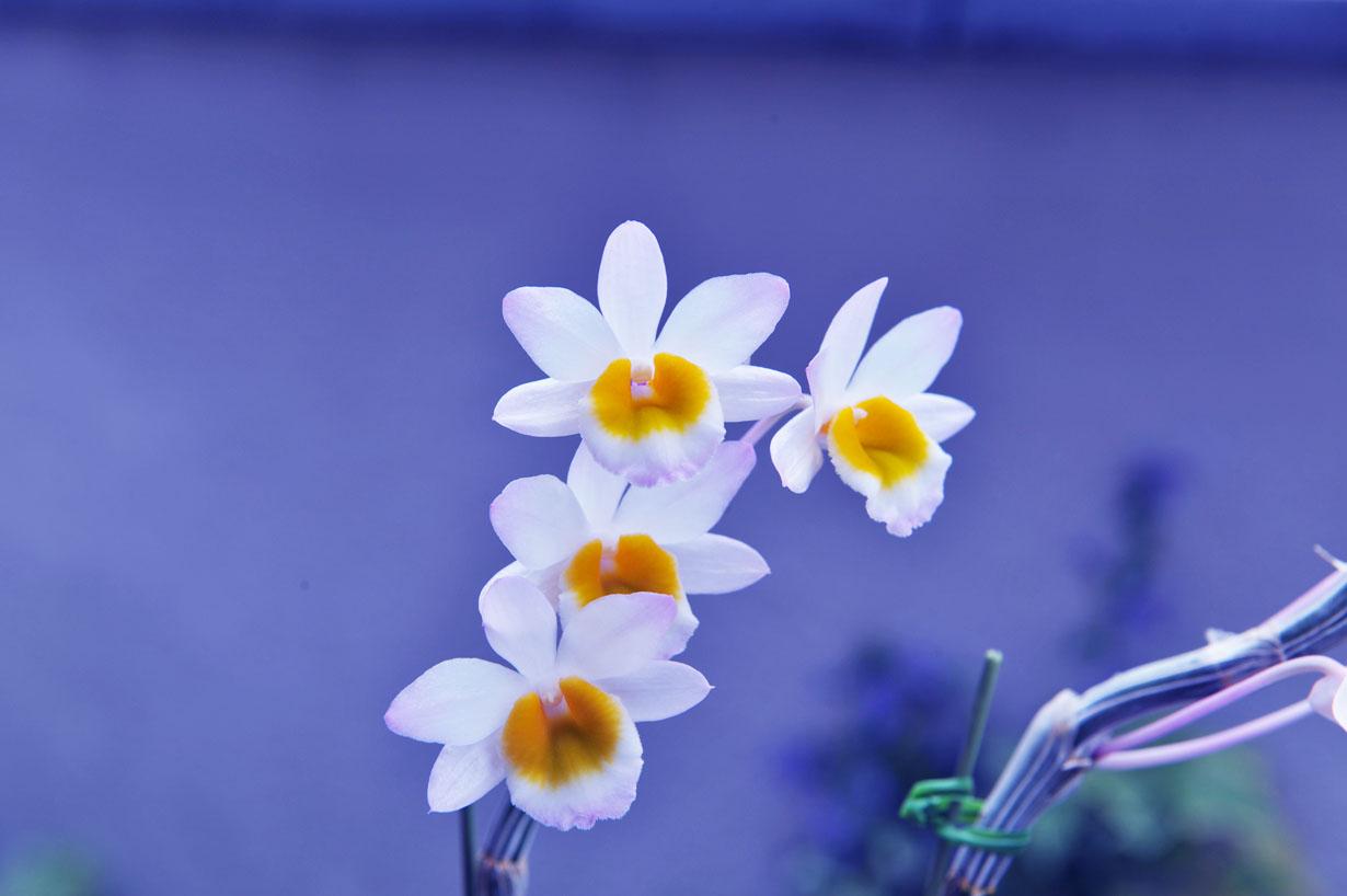 ランの花 壁紙写真_f0172619_1028561.jpg