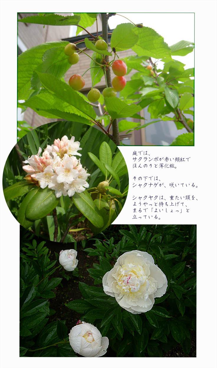 f0227323_1652885.jpg