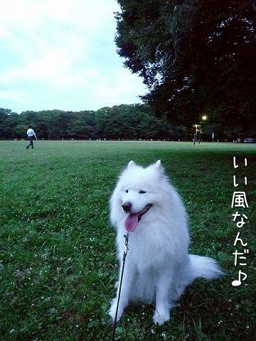 日曜おっきな公園_c0062832_18115549.jpg