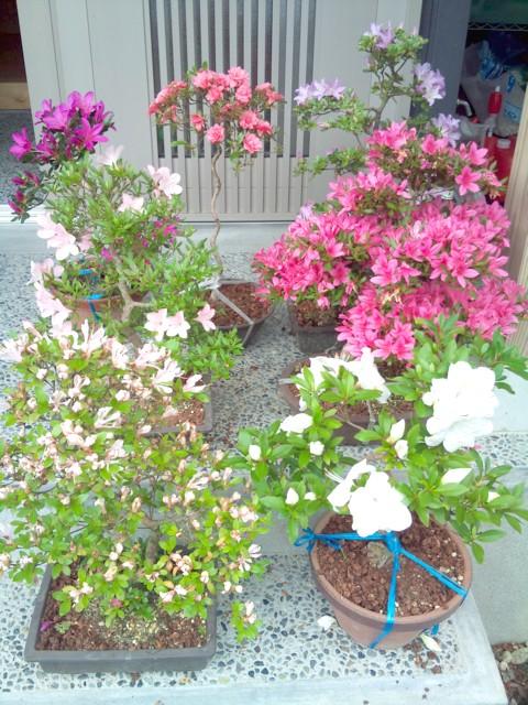 お客様自作の庭とサツキ_c0170940_1913692.jpg