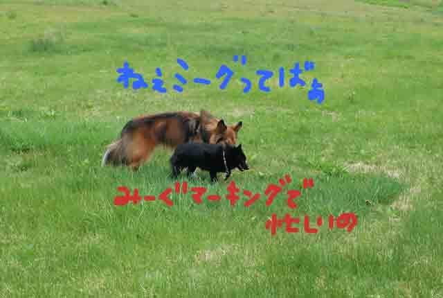 c0128344_2192583.jpg