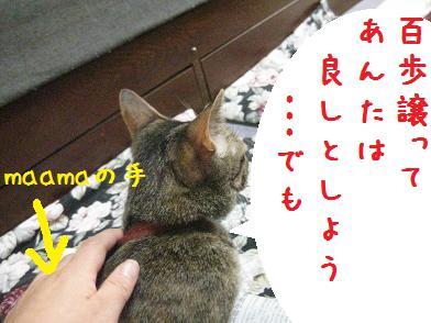 b0151748_12503181.jpg