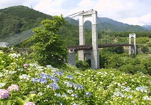 秦野戸川公園のあじさいが見ごろだよ_c0171849_1643456.jpg