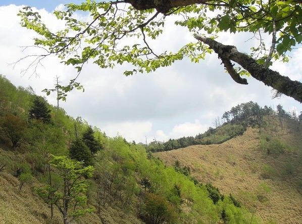 <2010年6月12日>奥秩父の遥かなる幽寂峰「和名倉山」 (リベンジ登山)_c0119160_20415994.jpg