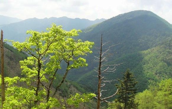 <2010年6月12日>奥秩父の遥かなる幽寂峰「和名倉山」 (リベンジ登山)_c0119160_2043112.jpg