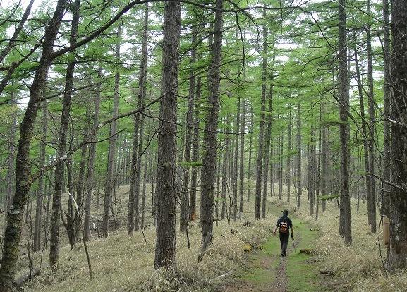 <2010年6月12日>奥秩父の遥かなる幽寂峰「和名倉山」 (リベンジ登山)_c0119160_21312060.jpg